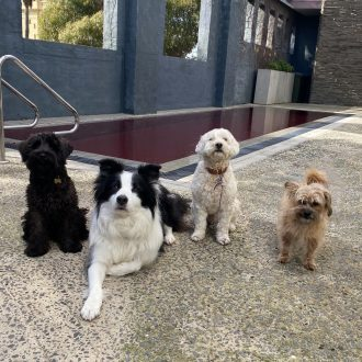 Ziggy, Pepe, Ted, Bella